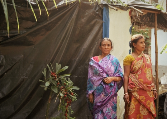 Women worship Manasha plant at Jafarpur village