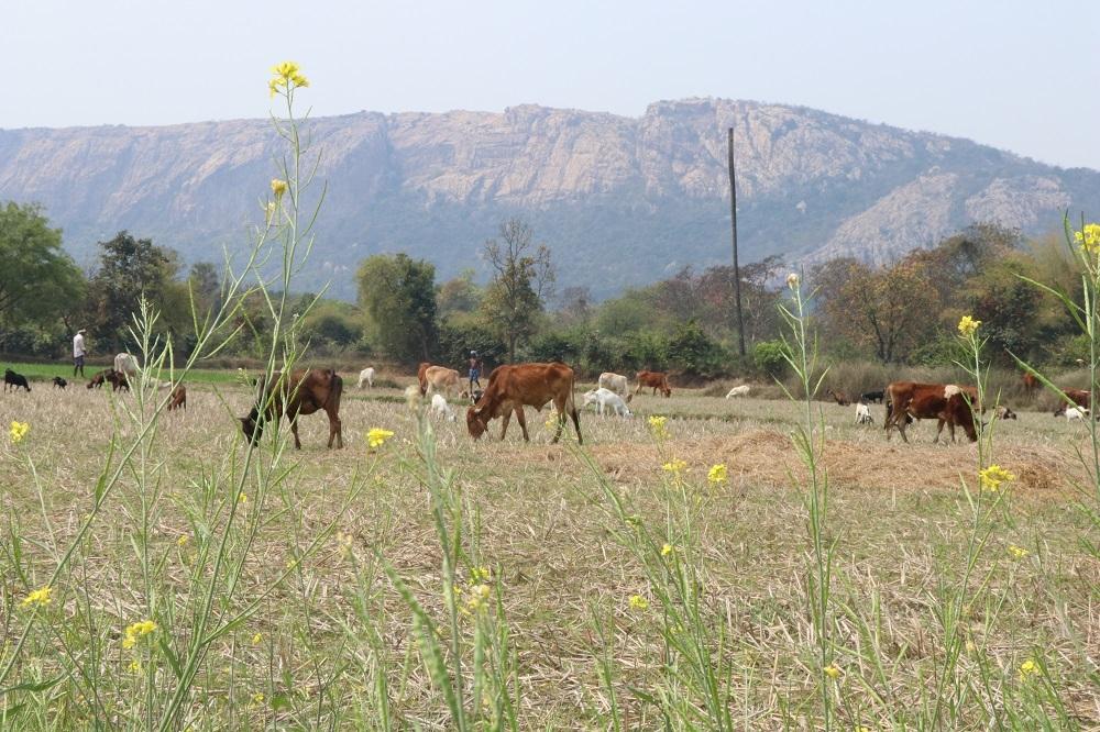 कबरा पहाड़, जिला-रायगढ़, छत्तीसगढ़