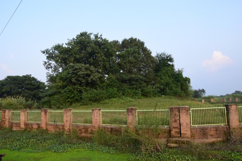 चित्र ८. पश्चिमी चम्पारण के लौरिया नंदन स्थित अशोक स्तंभ के क़रीब मौजूद टीला (फोटो:अफ़रोज़ आलम साहिल, अक्टूबर, 2019)