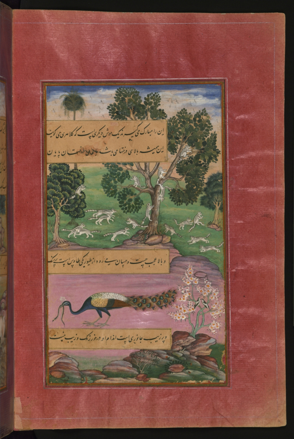 Animals and Birds of Hindustan - Squirrels and Peacock, from the Baburnama (Book of Babur), Photo: The Walters Art Museum