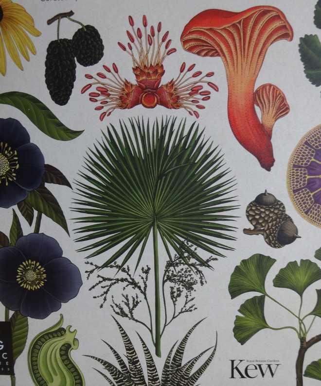 Botanicum, Prof. Kathy Willis, Kew Gardens, plant paintings, Courtesy: The Tribune