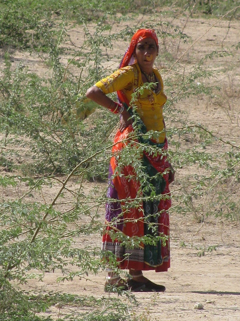 A Bishnoi woman from Rajasthan (Photo: Wikimedia Commons)