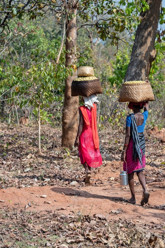 Women Carrying their Mahua Collection Home