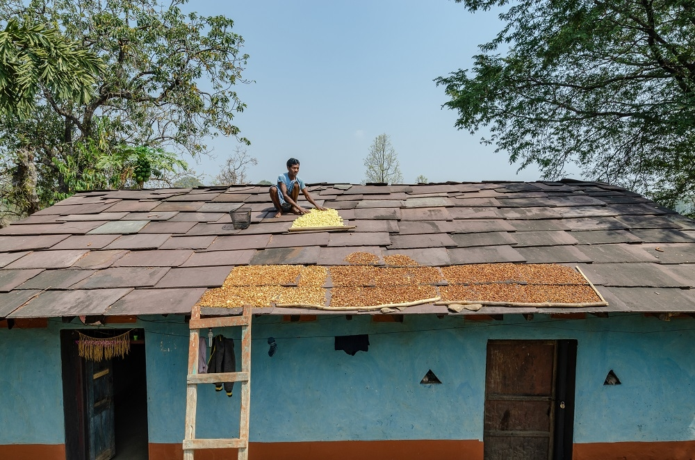 A Man Drying Mahua Flowers on his Roof