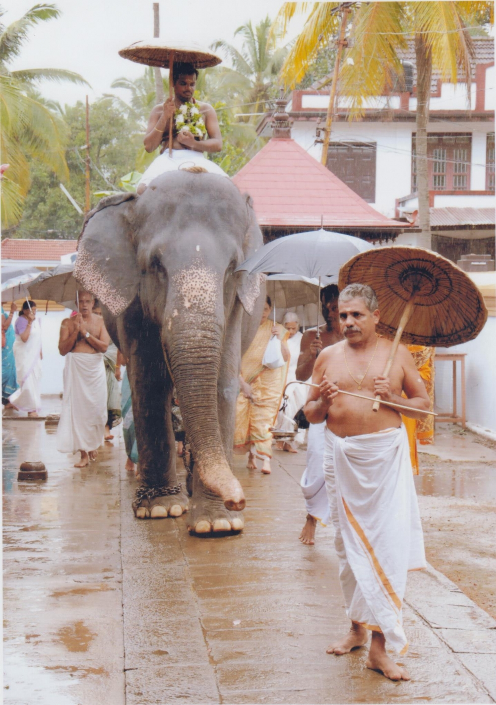 Elephant is used for Seeveli, a daily temple ritual