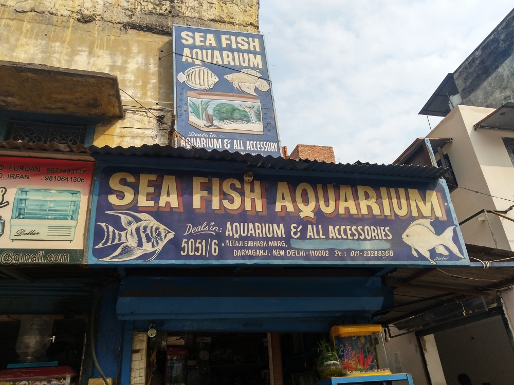 Fig 2: An aquarium shop in Daryaganj with a vibrant signboard created by Kafeel Artist, showcasing the now-diminishing examples of illustrated signages