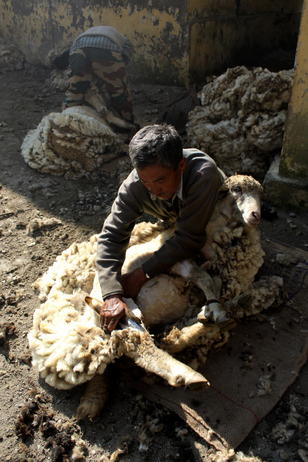 Fig 5: An elderly sheep shearer of the Jadh Bhotiya Community using a traditional tool called chambaa for his work