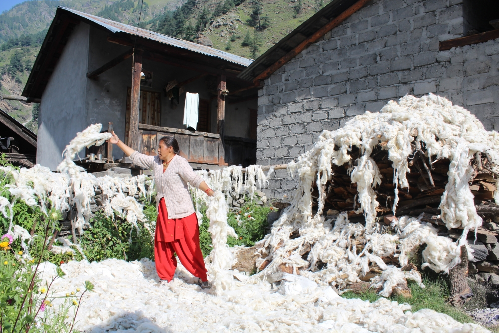 Fig 6: A woman drying the sheared and washed wool in her courtyard