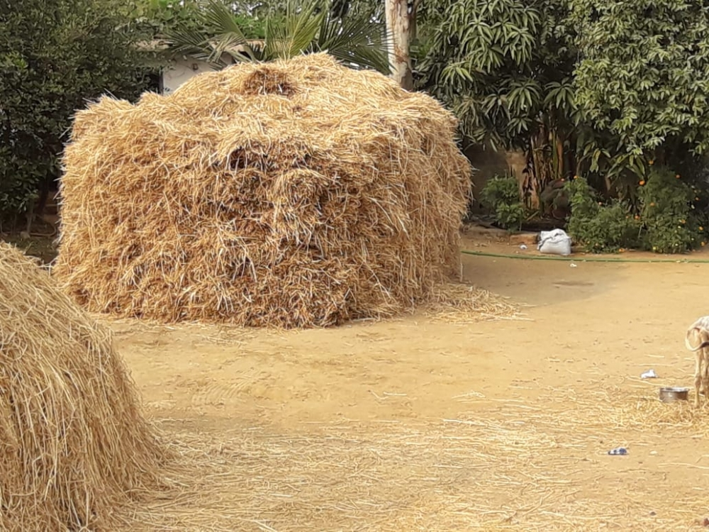 Puwal, stack of dried rice stalks