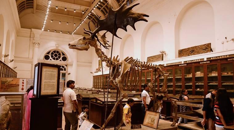 Indian Museum, Kolkata, MuseumsofIndia.org
