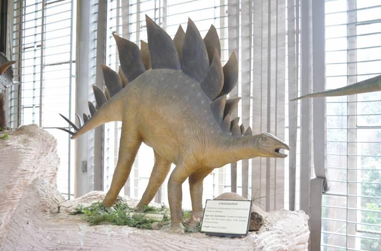 Natural History Museum Chandigarh_MuseumsofIndia