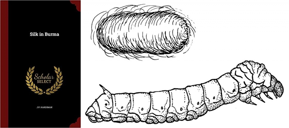 Silk in Burma book - Silkworm and cocoon, Photo Courtesy: Pearson Scott Foresman [Public domain]