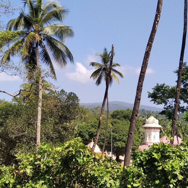View of Shri Lakhaneshwar Mukhud, Agonda, surrounded by a lush green forest. Most Goan temples are located near springs or rivers, and are perfectly integrated in the landscape. This reveals an architectural culture that, despite changes across time, has managed to maintain an intimate symbiosis with the place where it belongs. (Courtesy: Pedro Pombo)