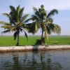 Backwaters and paddy fields in Kuttanad (Courtesy: Wikimedia Commons)