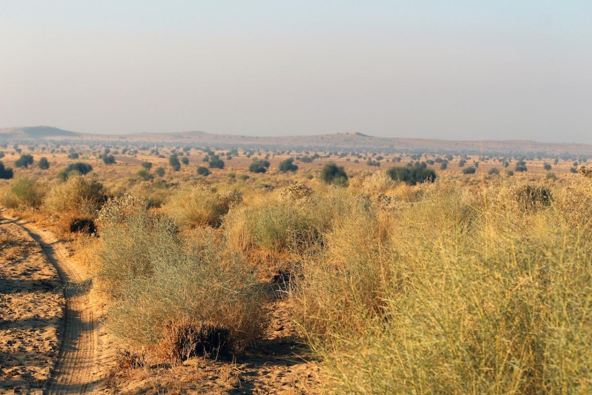 The Vegetation of the Thar Desert: Geography, History ...